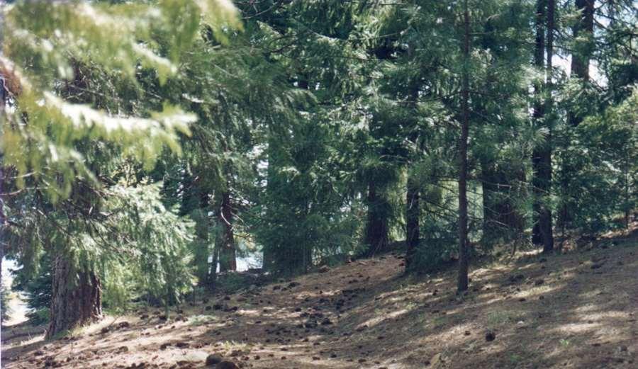 Sedona Shasta